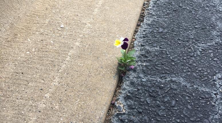 determined flower