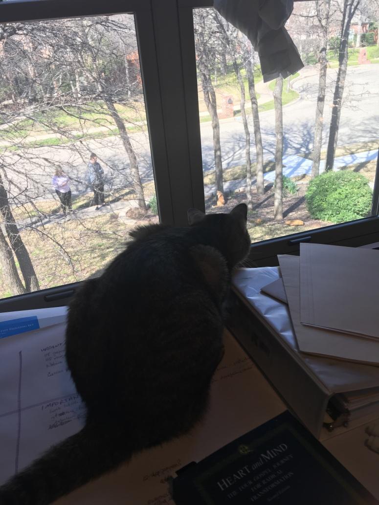 cat watch cat